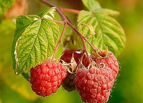 Raspberries_Herbalife